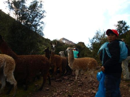 Passing a herd of llama on the first day of the Lares Trek, Peru. Photograph: Matthew Barker 2009